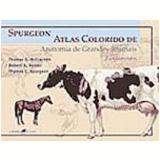 Spurgeon Atlas Colorido de Anatomia de Grandes Animais Fundamentos - Robert A. Kainer, Thomas L. Spurgeon, Thomas O. Mccracken