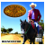Orlando Resende-reencontro (CD)
